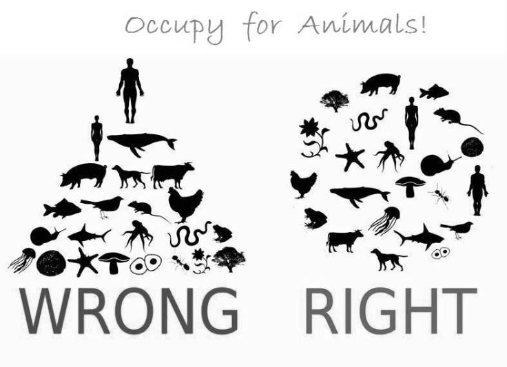 occupy for animals