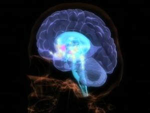 brain - neuroplasticity