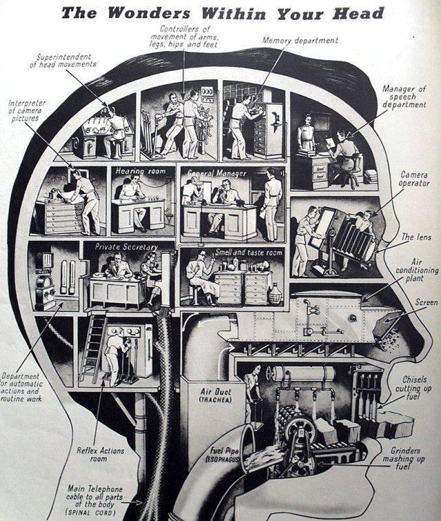 inside the head
