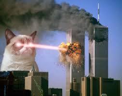 Grumpy Cat weighs in on WTC